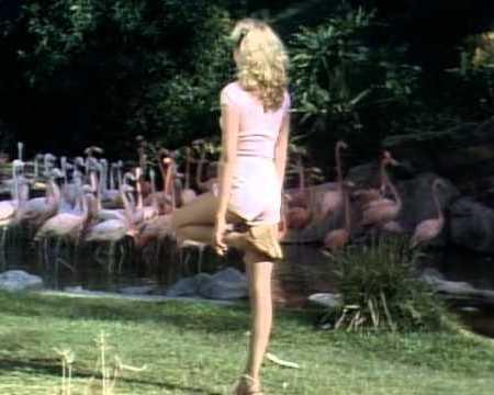 Priscilla Barnes imitates flamingo